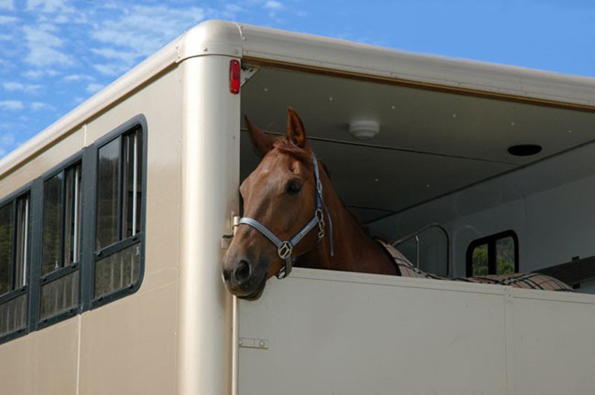 Chiltern Horsebox Services can maintain your horsebox to the highest possible standard so that your horses can be transported safely.